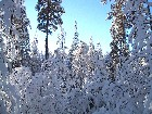 Winter forest 2002